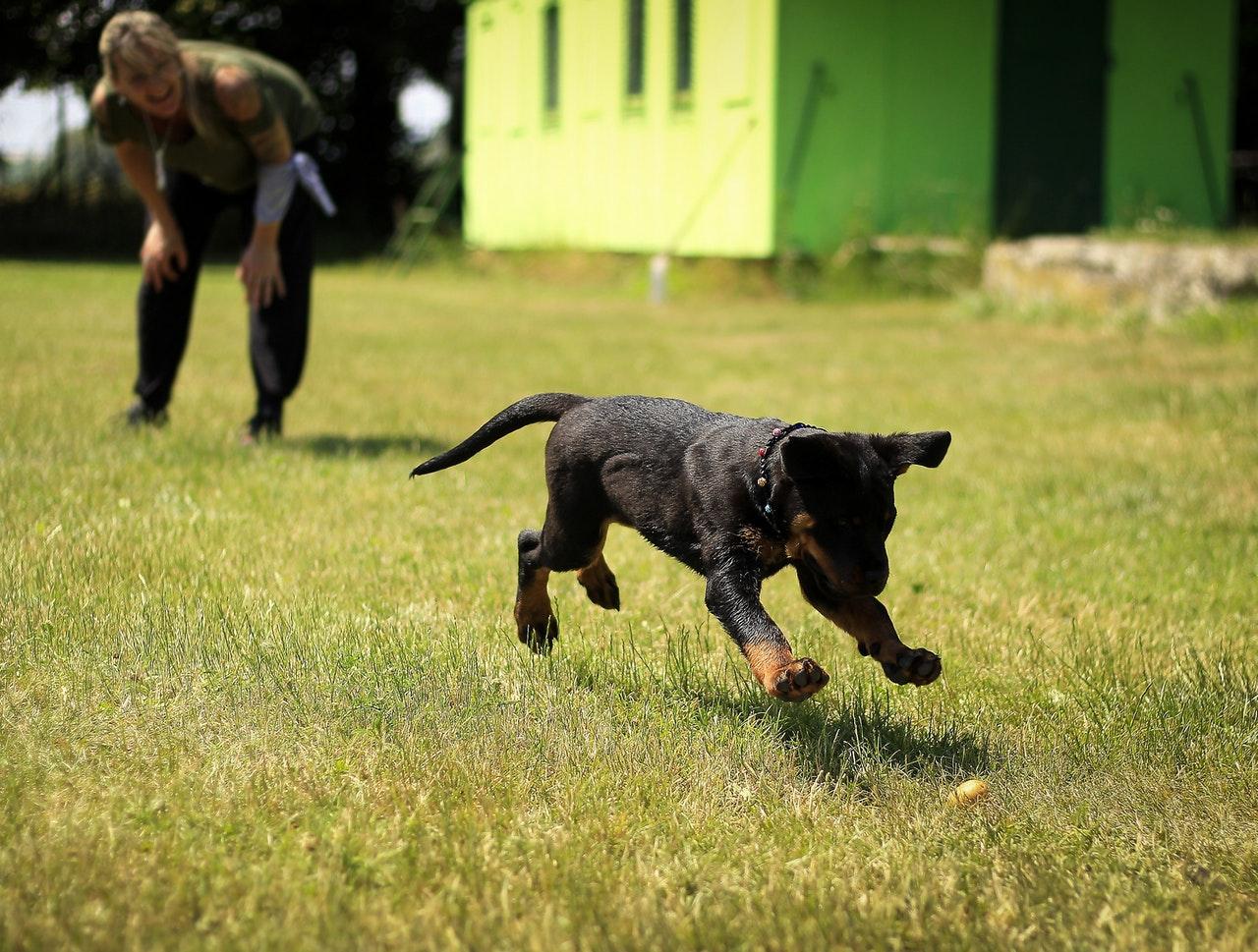 Best New Dog Trainer Job Opportunities - Wednesday 10/28